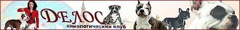 Американский стаффордширский терьер, китайская   хохлатая, французский бульдог,родезийский риджбек и мексиканская голая собака   (ксоло).